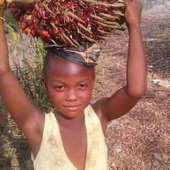 africasiaeuro.com Palm fruit carrying